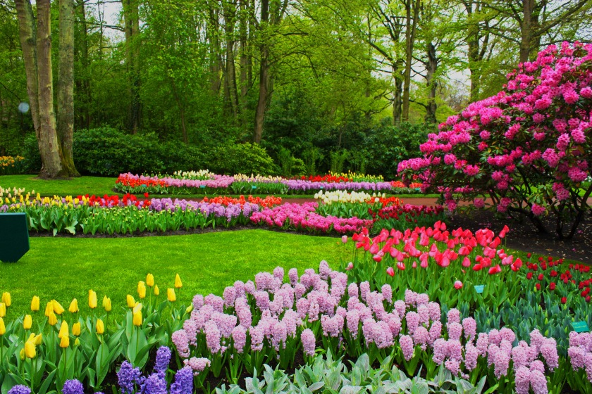 park-in-spring-picture.jpg