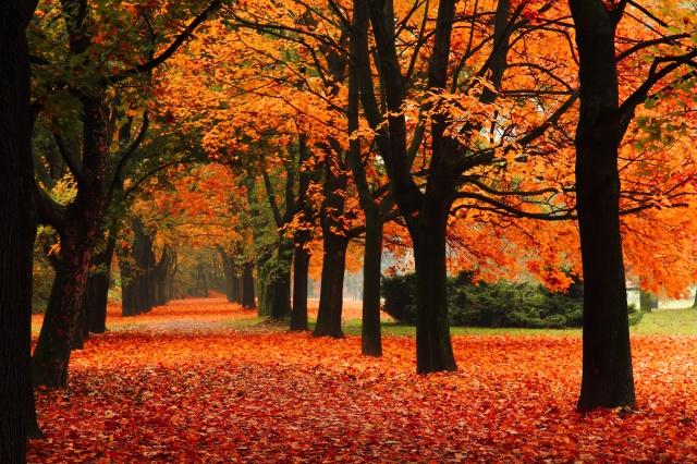 sheet-market-fall-destination-locations-blog.jpg