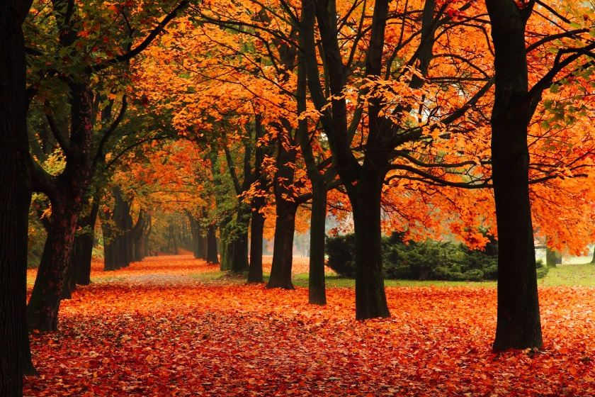 sheet-market-fall-destination-locations-blog.jpg