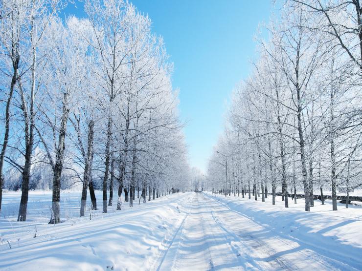winter-05.jpg.png
